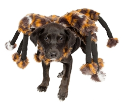 Pet Krewe Spider Costume