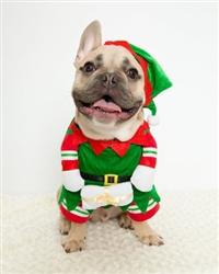 Pet Krewe Elf Pet Costume