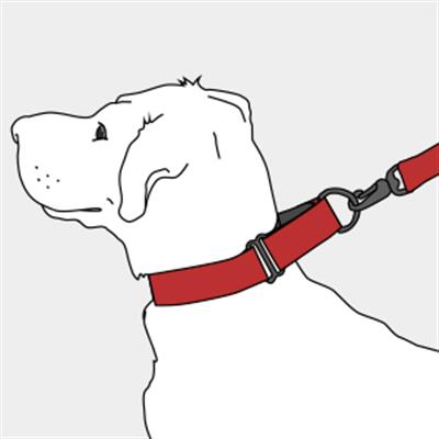 Pinwheel Caribbean Blue Martingale Dog Collar