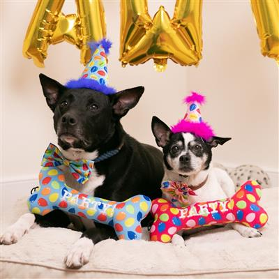 Party Hats by Huxley & Kent