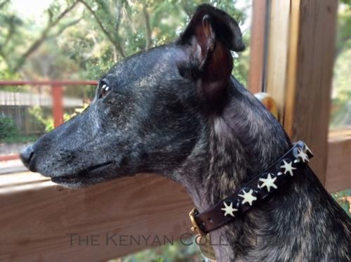 Batik Bone Star Collar & Leash Collection