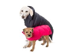 Coat | Down Puffer Coat