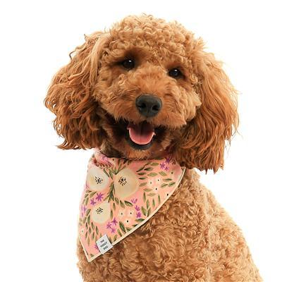 Harper Floral Dog Bandana