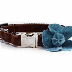 Camellia Blue Velvet Collar Gold Metal Buckles