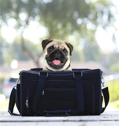 Hemp Eco Pet Carrier