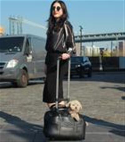 Darien Carrier with Pet-Trek