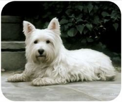 Westie on Porch Mouse Pad