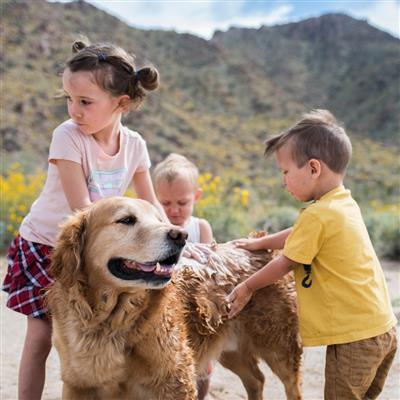 Dog Whisperer Tick and Flea Shampoo - 16 oz