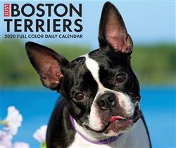 Boston Terriers 2020 Box Calendar