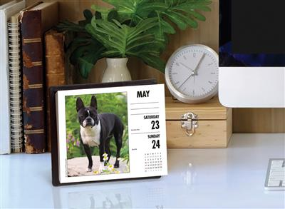 Boston Terriers 2020 Box Calendar