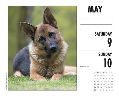German Shepherds 2020 Box Calendar