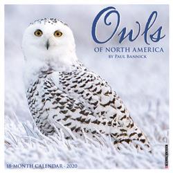 Owls 2020 Mini Calendar