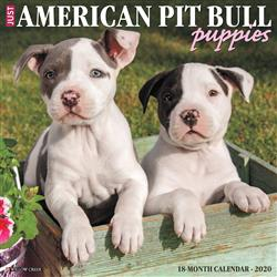 American Pit Bull Terrier Puppies 2020 Wall Calendar