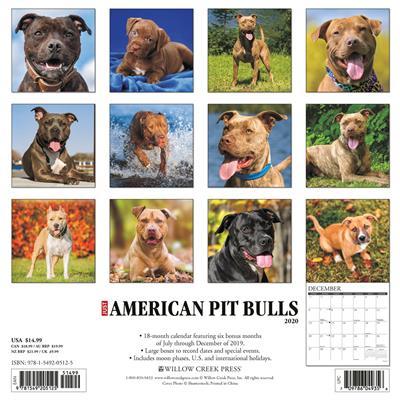 American Pit Bull Terriers 2020 Wall Calendar