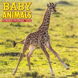 Baby Animals 2020 Wall Calendar