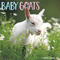 Baby Goats 2020 Wall Calendar