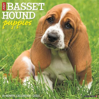 Basset Hound Puppies 2020 Wall Calendar
