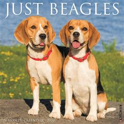 Beagles 2020 Wall Calendar