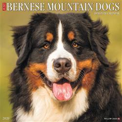 Bernese Mountain Dogs 2020 Wall Calendar