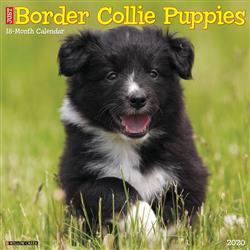 Border Collie Puppies 2020 Wall Calendar