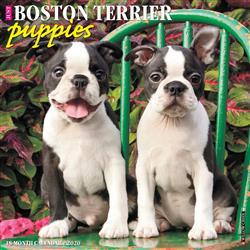 Boston Terrier Puppies 2020 Wall Calendar