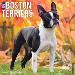 Boston Terriers 2020 Wall Calendar