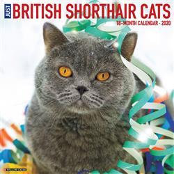 British Shorthair Cats 2020 Wall Calendar