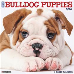 Bulldog Puppies 2020 Wall Calendar