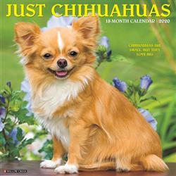 Chihuahuas 2020 Wall Calendar