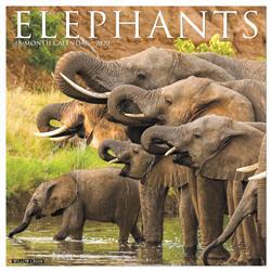 Elephants 2020 Wall Calendar