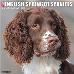 English Springer Spaniels 2020 Wall Calendar