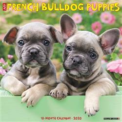 French Bulldog Puppies 2020 Wall Calendar