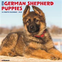 German Shepherd Puppies 2020 Wall Calendar
