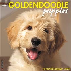 Goldendoodle Puppies 2020 Wall Calendar