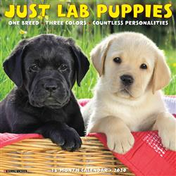 Lab Puppies 2020 Wall Calendar