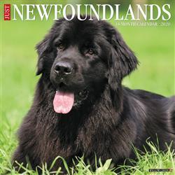 Newfoundlands 2020 Wall Calendar