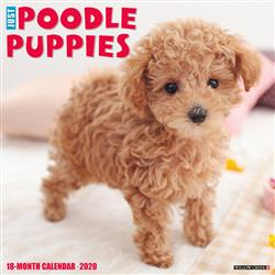 Poodle Puppies 2020 Wall Calendar