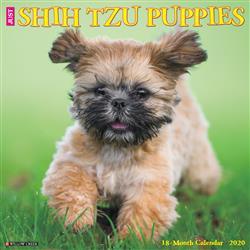 Shih Tzu Puppies 2020 Wall Calendar