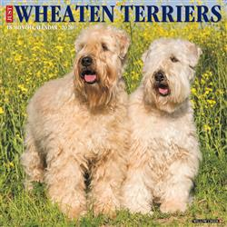 Wheaten Terriers 2020 Wall Calendar