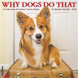 Why Dogs Do That 2020 Wall Calendar