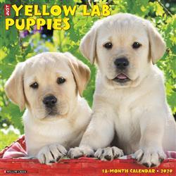 Yellow Lab Puppies 2020 Wall Calendar