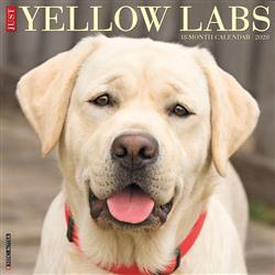 Yellow Labs 2020 Wall Calendar
