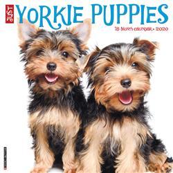 Yorkie Puppies 2020 Wall Calendar