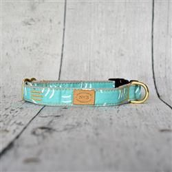 "1"" Aqua Parens Collars and Leads"