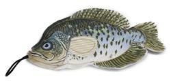 Denim Fish - Crappie