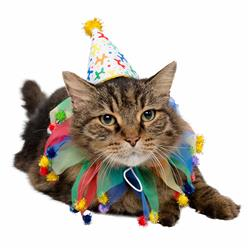 Celebration/Birthday Hat & Collar Set for Cats