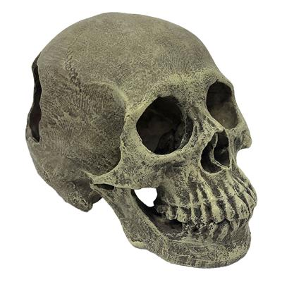 Komodo Human Skull Full