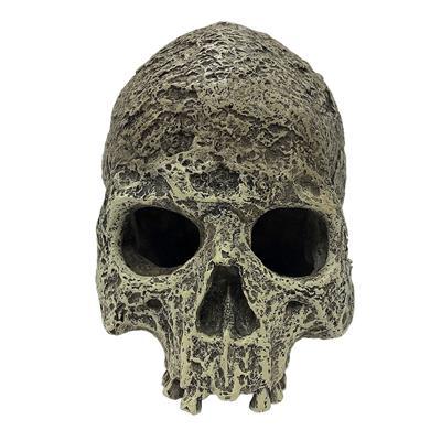 Komodo Human Skull Half