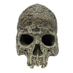 Komodo Human Skull Textured