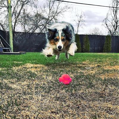 SodaPup - Crazy Bounce Retrieving Toy - Pink